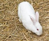 stock photo of rabbit hutch  - Cute and funny single rabbit standing on dry grass - JPG
