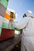 picture of bee keeping  - Beekeepers in protective clothing unloading honeycomb crates together from truck - JPG