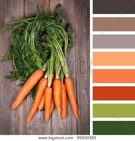 A bunch of fresh carrots on wooden background, in a colour palette with complimentary colour swatches