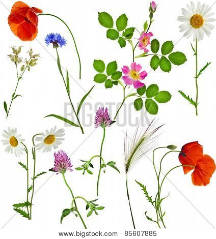 Fresh herbs grass plant  flowers - collection set isolated on white background
