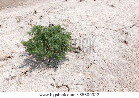 Single Tree On A Salt White Land