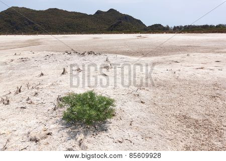 Single Tree On A White Ground