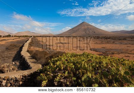 cacti and the volcano on the horizon, the Canary Islands