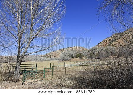 Fields and cattle gate
