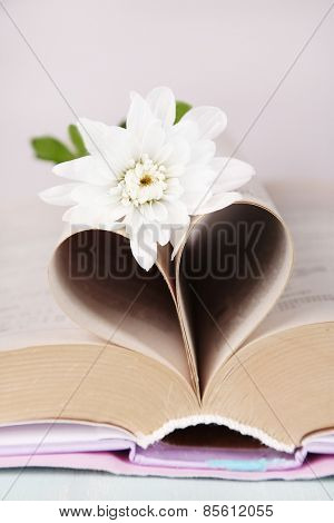 Open book with shape of heart from pages and flower on light background