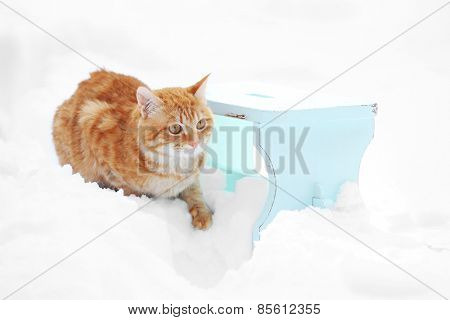 Cute ginger cat on color wooden stool on snow background