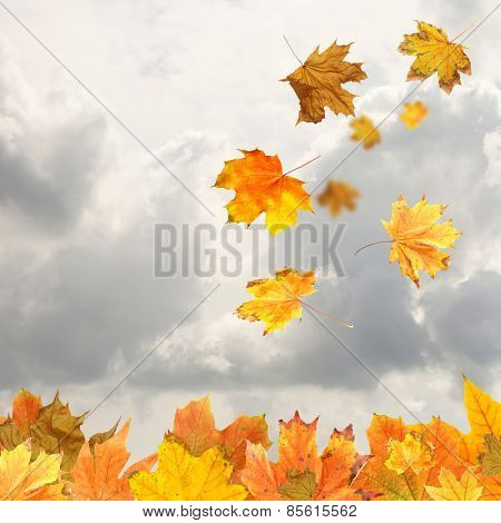 Collage of autumn leaves on sky background