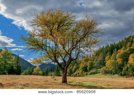 green tree and cloudy sky
