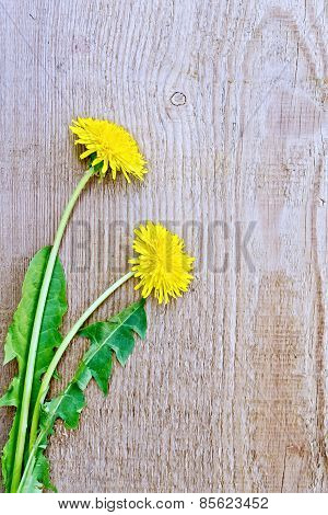 Dandelions on the old board