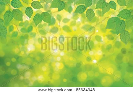 Vector Birch's Leaves On Spring  Bokeh Background.