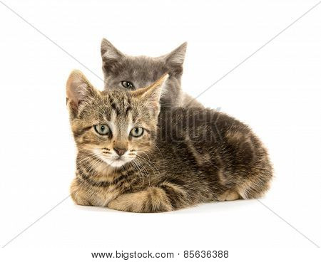 Two Cute Kittens On White