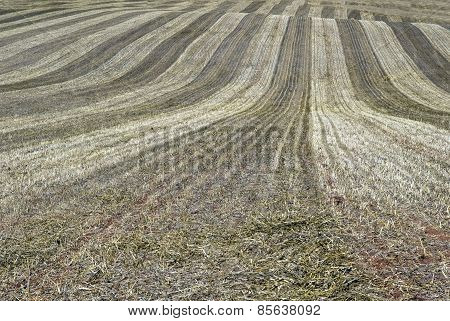 Farmer's Field After Harvest