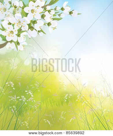 Vector blossoming branch of apple tree spring landscape.