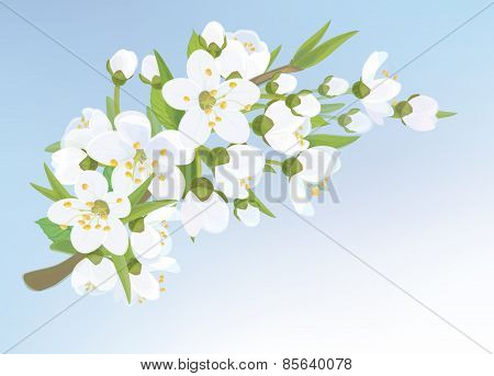 Vector blossoming branch.