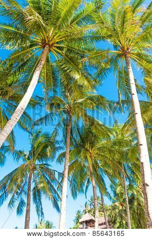 palm trees on blue sky background, summer vacations in tropics