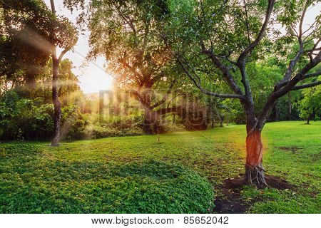 Sunset  With Sunlight And Trees