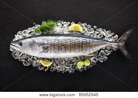 Tuna Fish On Ice On A Black Stone Table Top View