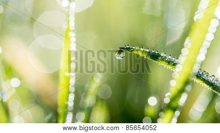 Blades Of Green Grass With Glistening Raindrops
