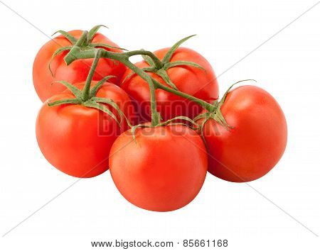 Tomatoes On The Vine