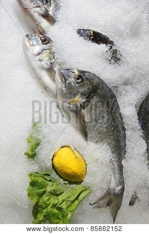Bream/ Fish