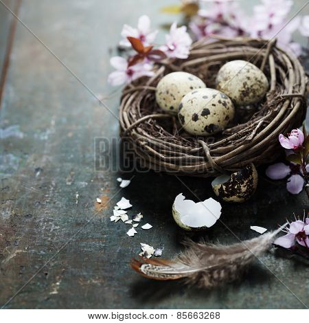Quail easter eggs in a nest  and spring cherry blossoms on wooden table