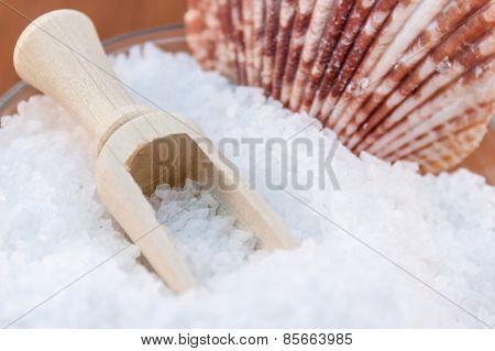 Sea Salt And Shells
