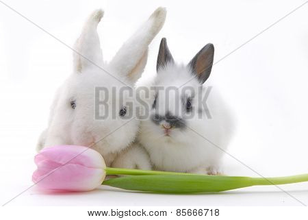 Small Rabbit And Toy With Flower