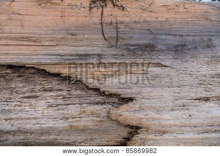 Driftwood Closeup - Background