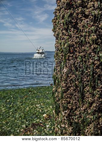 Boat Cruises Past Barnacle Encrusted Piling