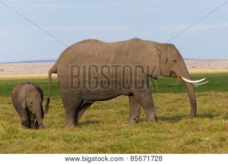 elephant with child