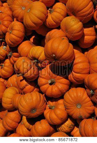 Autumn Harvest: Pumpkins