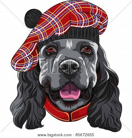 vector dog American Cocker Spaniel in Scottish Tam
