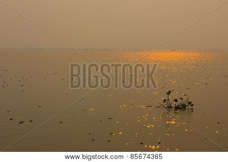 Sun Reflections On The Lake
