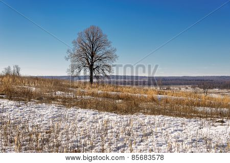 Early spring, thawing snow in the field with a lonely tree in blue sky