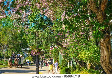 Flowery Mackinac Street