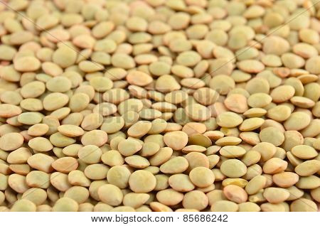 Green lentil background