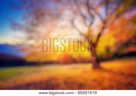 Fantastic morning scene. Red and yellow autumn leaves. Retro filtered. Beauty world. Natural blurred background. Soft light effect.