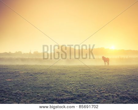 Arabian horses grazing on pasture at sundown in orange sunny beams. Dramatic foggy scene. Carpathians, Ukraine, Europe. Beauty world. Retro style filter. Instagram toning effect.