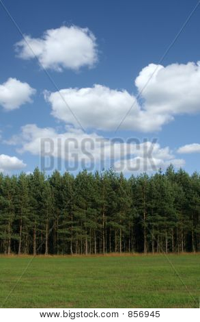 tree line with cumulus clouds