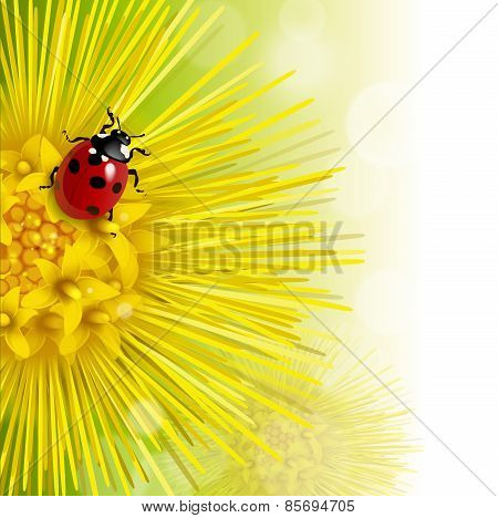 Floral Background With A Coltsfoot