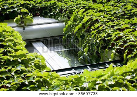 Dense foliage