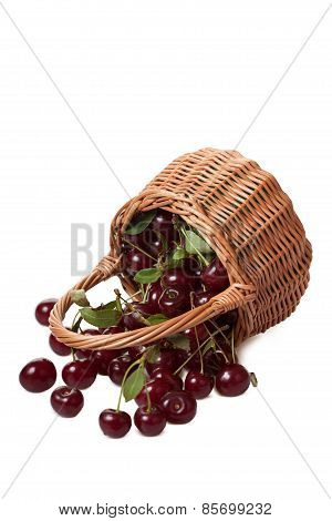 Ripe Berries Of Cherry