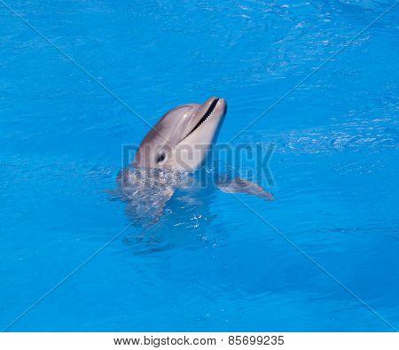 Dolphin Of An Afalin