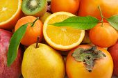 picture of satsuma  - collection of fresh fruits background - JPG