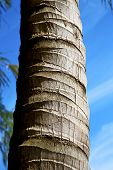 pic of white bark  - bark in kho tao bay asia isle white tree thailand and sky - JPG