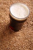 foto of malt  - Nonic pint glass of dark stout beer over malted barley grains - JPG