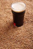 foto of malt  - Nonic pint glass of dark stout beer over malted barley grains - JPG