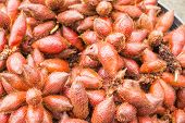 image of south east asia  - Exotic fruits and vegetables in South East Asia - JPG