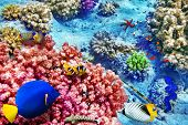 stock photo of shoal fish  - Wonderful and beautiful underwater world with corals and tropical fish. ** Note: Shallow depth of field ** Note: Soft Focus at 100%, best at smaller sizes - JPG