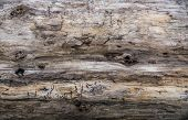 image of driftwood  - Closeup of weathered driftwood log - JPG
